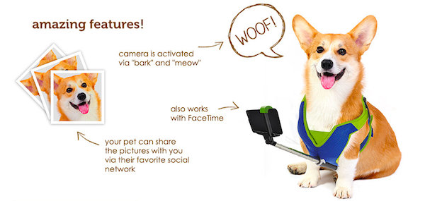 cats dogs can take selfies unassisted with this special selfie stick. Black Bedroom Furniture Sets. Home Design Ideas