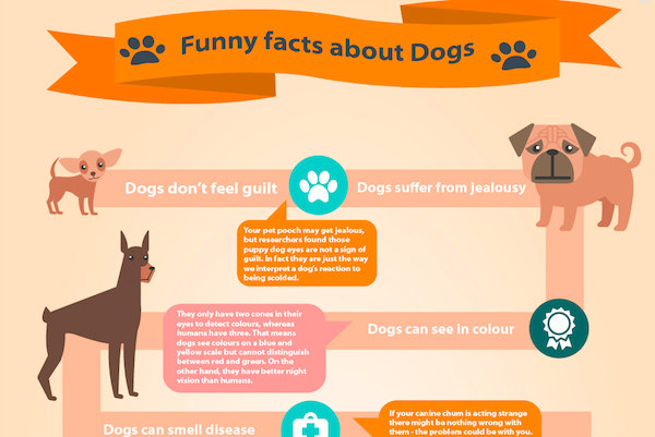 Fun Facts About Graphic Design