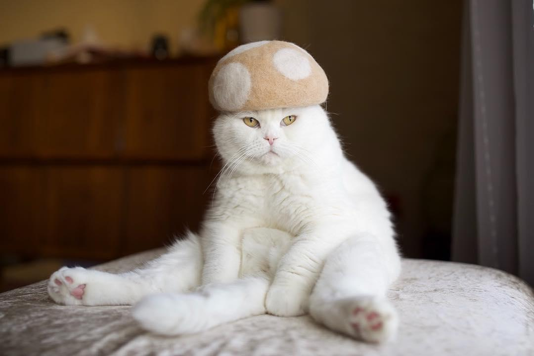 Cat Hats Made Of Cat Hair