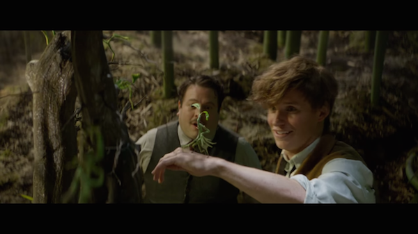 fantastic beasts and where to find them watch 2016 online