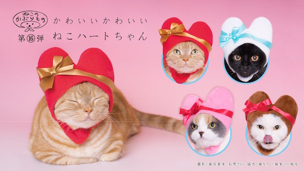 heart gift box hats you can dress your cranky cat in for