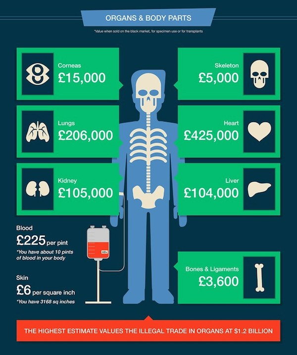 Infographic How Much Is The Human Body Worth In Dollars - How much is the human body worth infographic