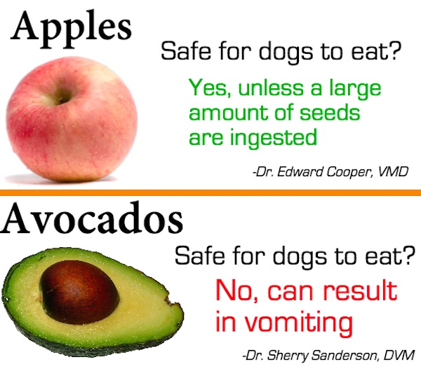 Safe For Dogs To Eat Grapes