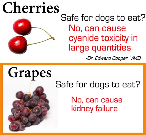 Can Dogs Eat Grapes And Cherries