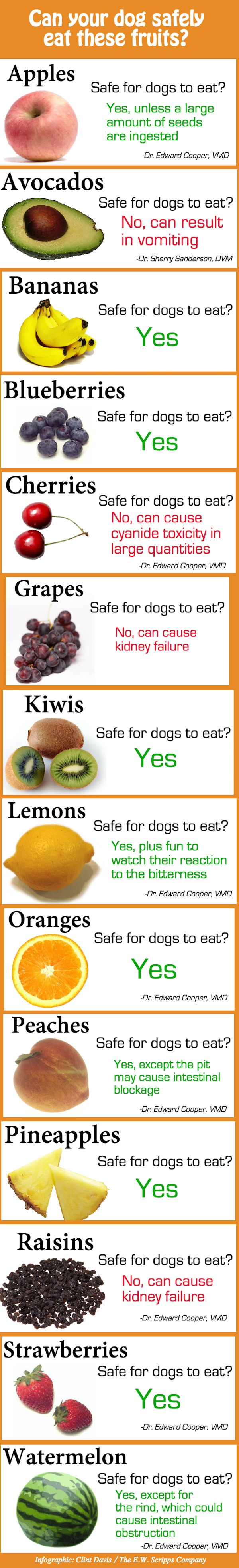 List Raw Vegetables Dogs Can Eat