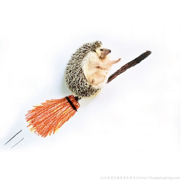 Cute Hedgehog That Dresses Up And Goes On Adventures Will Make You Smile