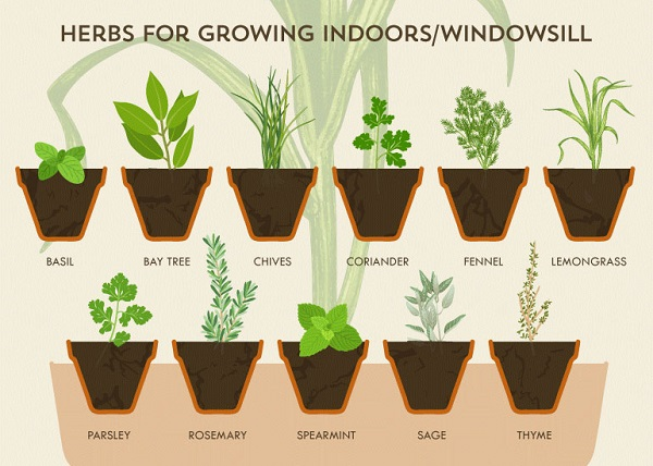 Infographic A Cheat Sheet For Growing Your Own Herbs At