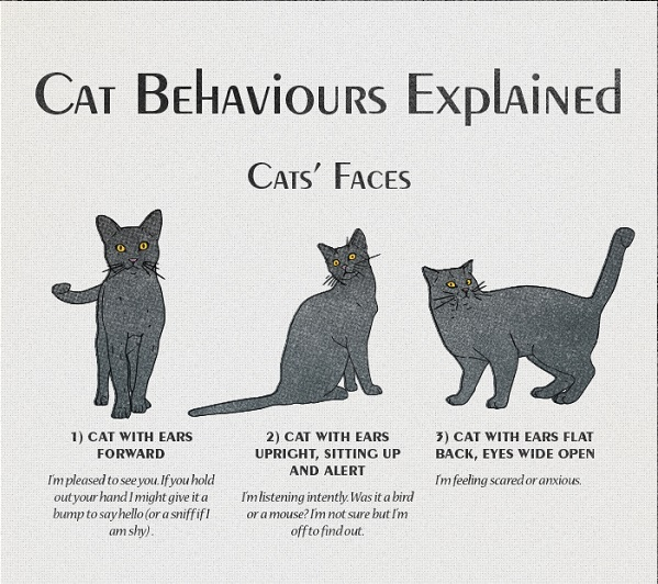 Cat Behaviors And Meanings