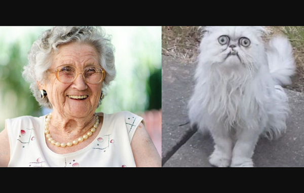 Cat's Rare Face Grabs The Attention Of Instagram, Gets Likened To Elderly Lady
