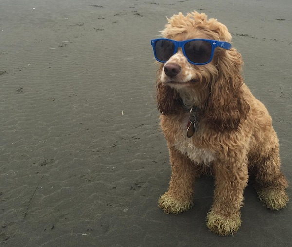 Chill Beach Pup Is Turned Into Hilarious Memes In Photoshop Battle - DesignTAXI.com