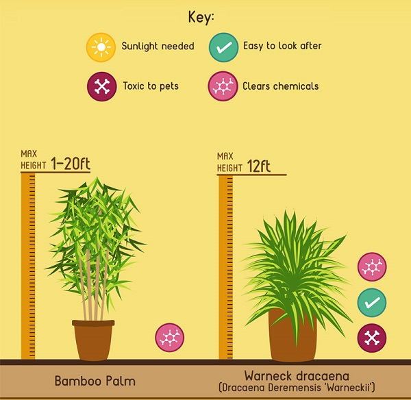 Infographic: 10 Best Indoor Plants That Help To Purify The Air In Your Home