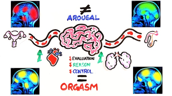 Watch Male Vs Female Orgasms, Which Is Better -2331