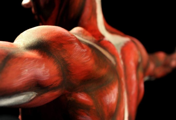 Amazing Realistic Paintings Of The Human Anatomy On Human Bodies