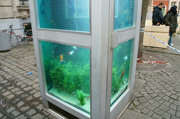 Old telephone booths converted into wonderful outdoor for Outdoor aquarium uk