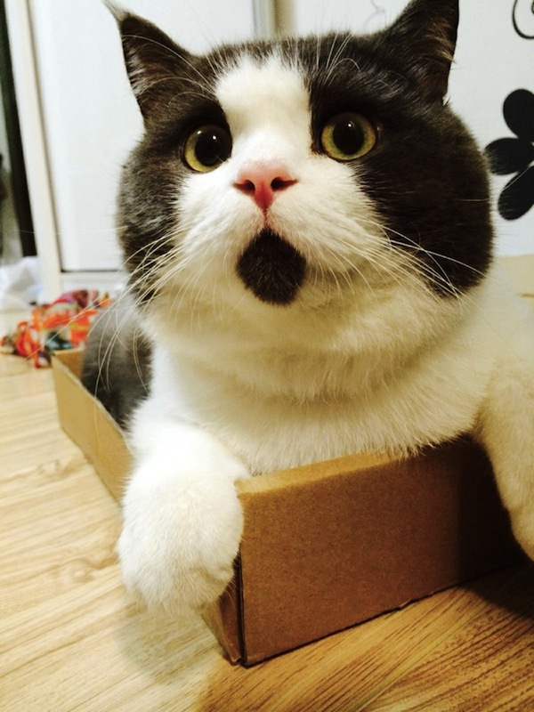 this poor cat has a perpetual surprised look on its face