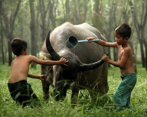 Touching Photographs Of Two Boys Taking Care Of Their Buffaloes
