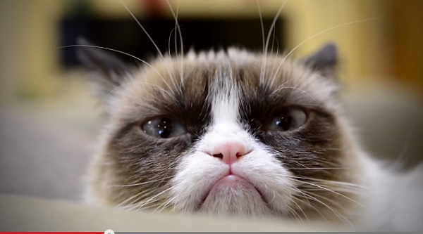 grumpy cat and other celebrity cats star in christmas music video