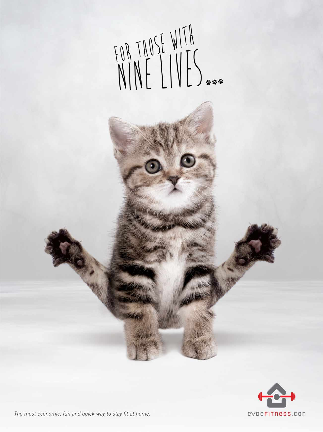 Adorable Fitness Ads Feature Cute Kittens Working Out ...