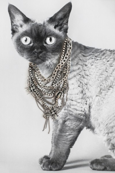 In Catvertisements Cats Wearing Jewelry Designtaxi Com