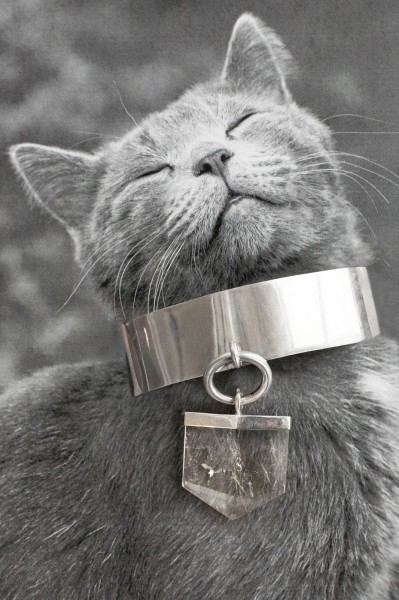 In 'Catvertisements', Cats Wearing Jewelry - DesignTAXI.com