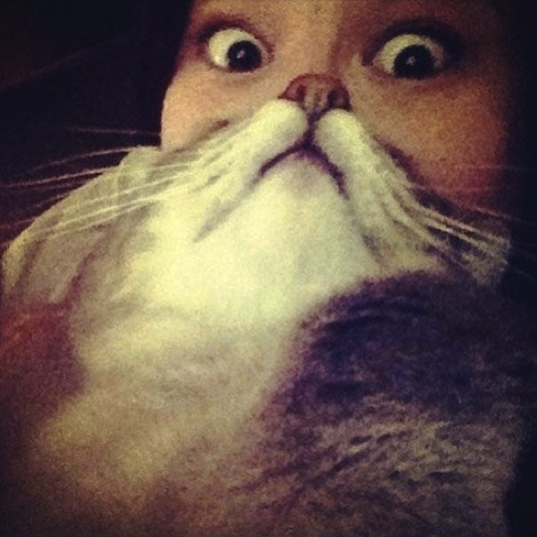 1 liam thinks! 'cat beard' meme takes the internet by storm