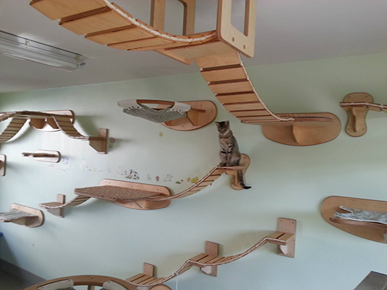 Ultimate Furniture for Cats
