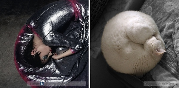 Funny Pictures Of Cats In The Awkward Poses Of Fashion Models