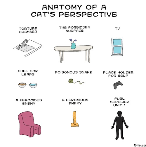 Anatomy of a house cat
