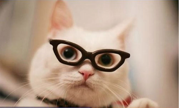 pictures of adorable cats wearing hipster glasses. Black Bedroom Furniture Sets. Home Design Ideas