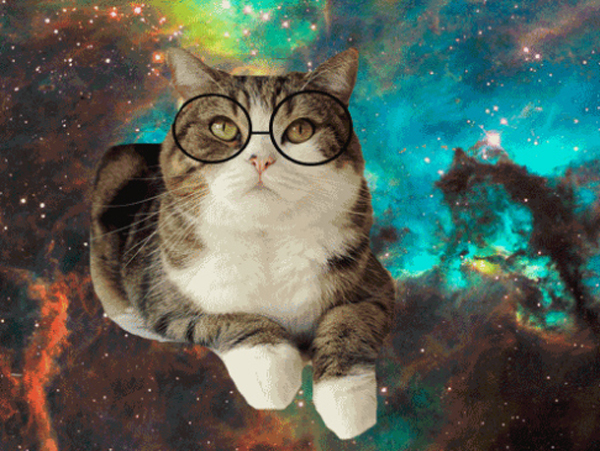 Pictures Of Adorable Cats Wearing Hipster Glasses
