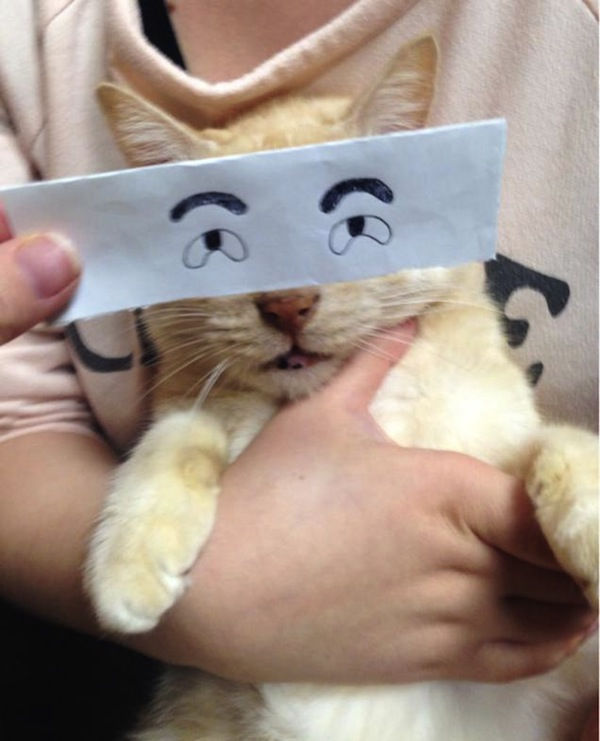 In Japan, New Meme Features Cats Paired With Funny Cartoon Eyes Drawn On Paper