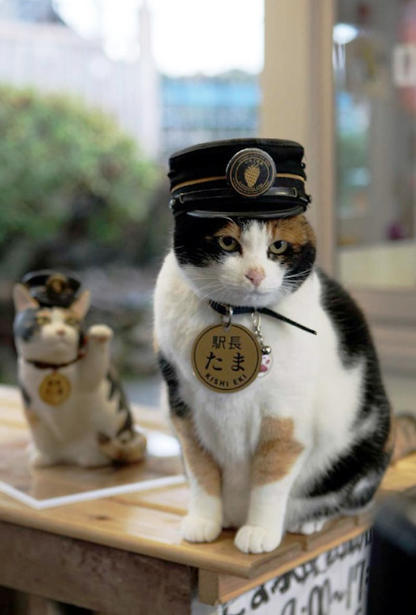 New Year Quotes: In Japan, A Cat That's A Train Stationmaster