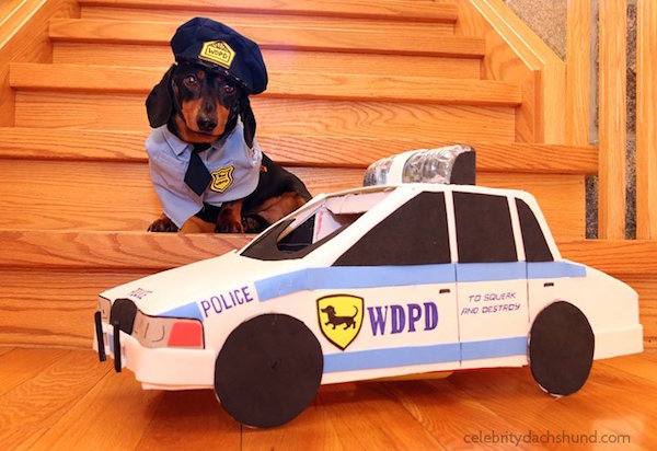 Crusoe the Celebrity Dachshund - High Speed Police Chase ...