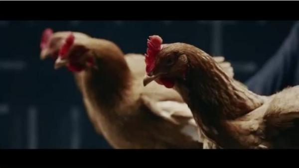 Dancing Chickens Demonstrate Stability In Hilarious