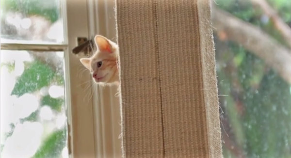 This Adorable Ad For Cat Food Will Have You Smiling To