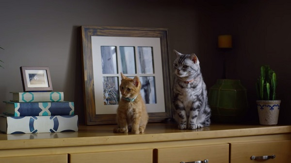 Adorable Ad Features An Older Cat Teaching A Kitten How To