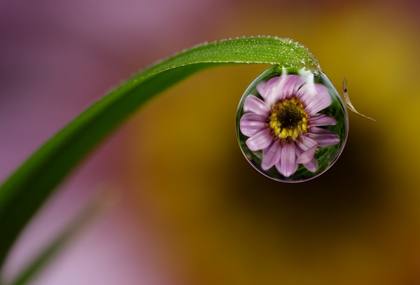 Amazing Macro Shots Of Dew Drops Designtaxi Com