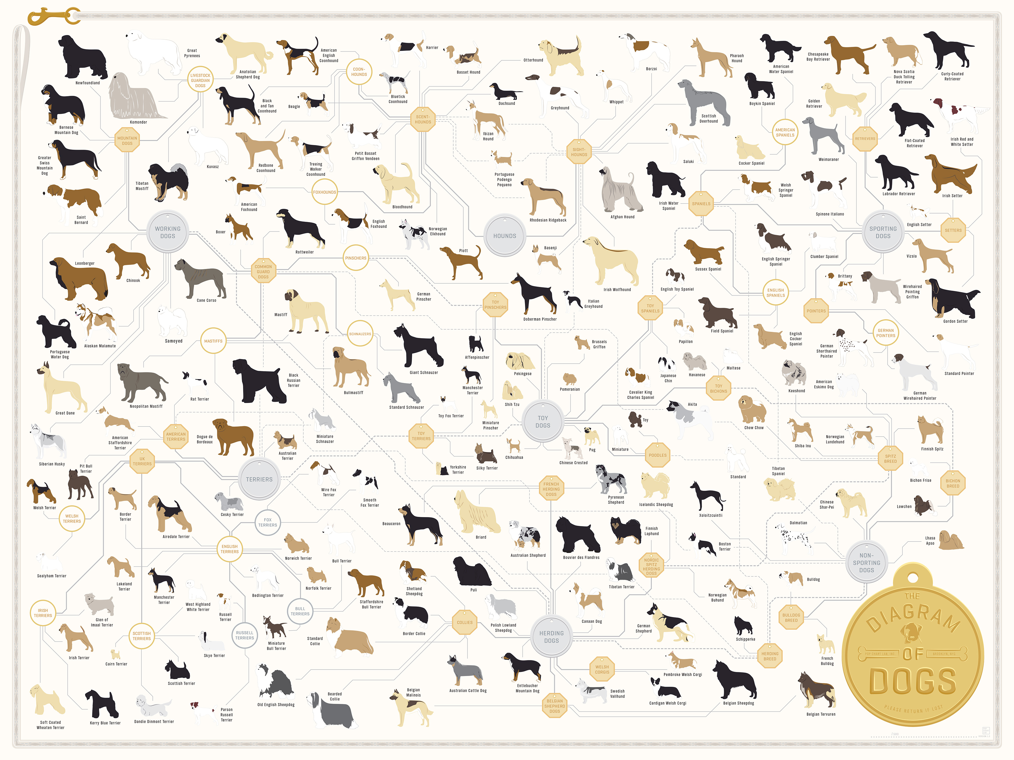 ... Diagram Of Dogs Featuring 181 Different Dog Breeds - DesignTAXI.com