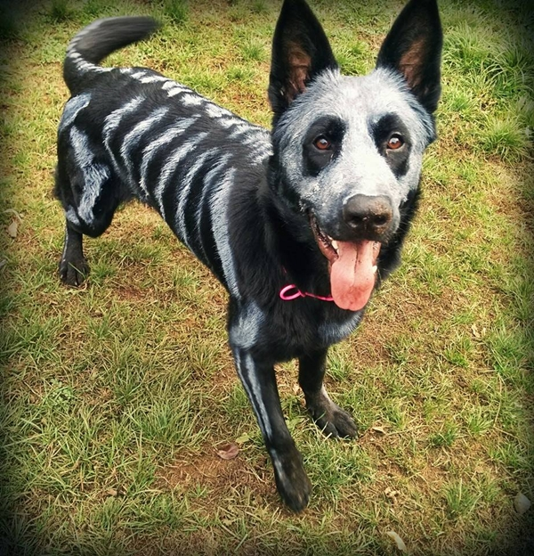 14 Month Old Halloween Costume