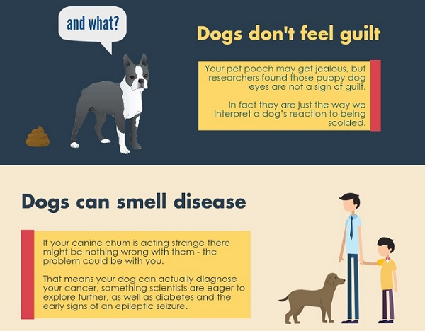 infographic 10 things you probably didn t know about dogs