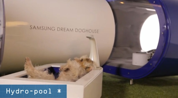Samsung unveil 'Dream Doghouse' at Crufts in sponsorship campaign