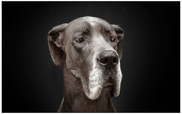 Captivating Portraits Of Dogs With Incredibly Human Like