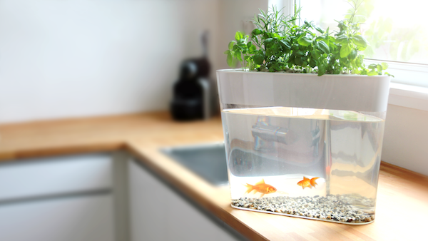 A hassle free mini herb garden that is also a self for Fish tank herb garden
