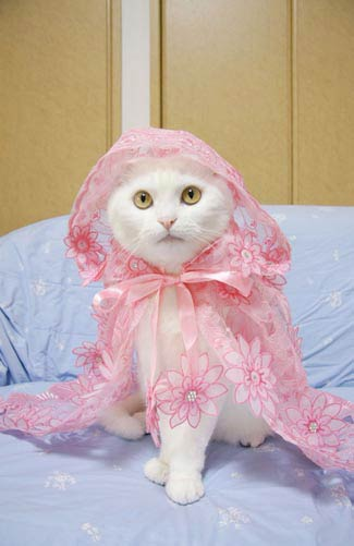 japanese cat fashion  a book full of outfits for cats