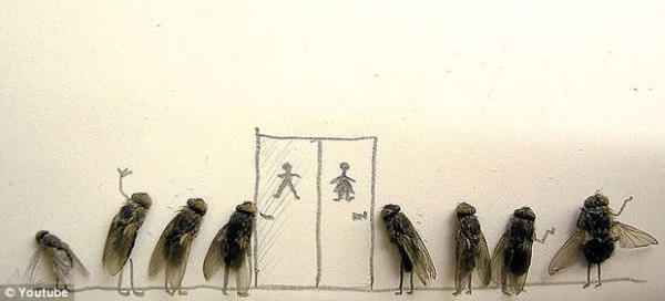 how to keep flies out if your house