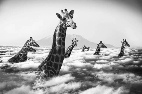 Funny, Surreal Pictures Of African Animals Living A ...