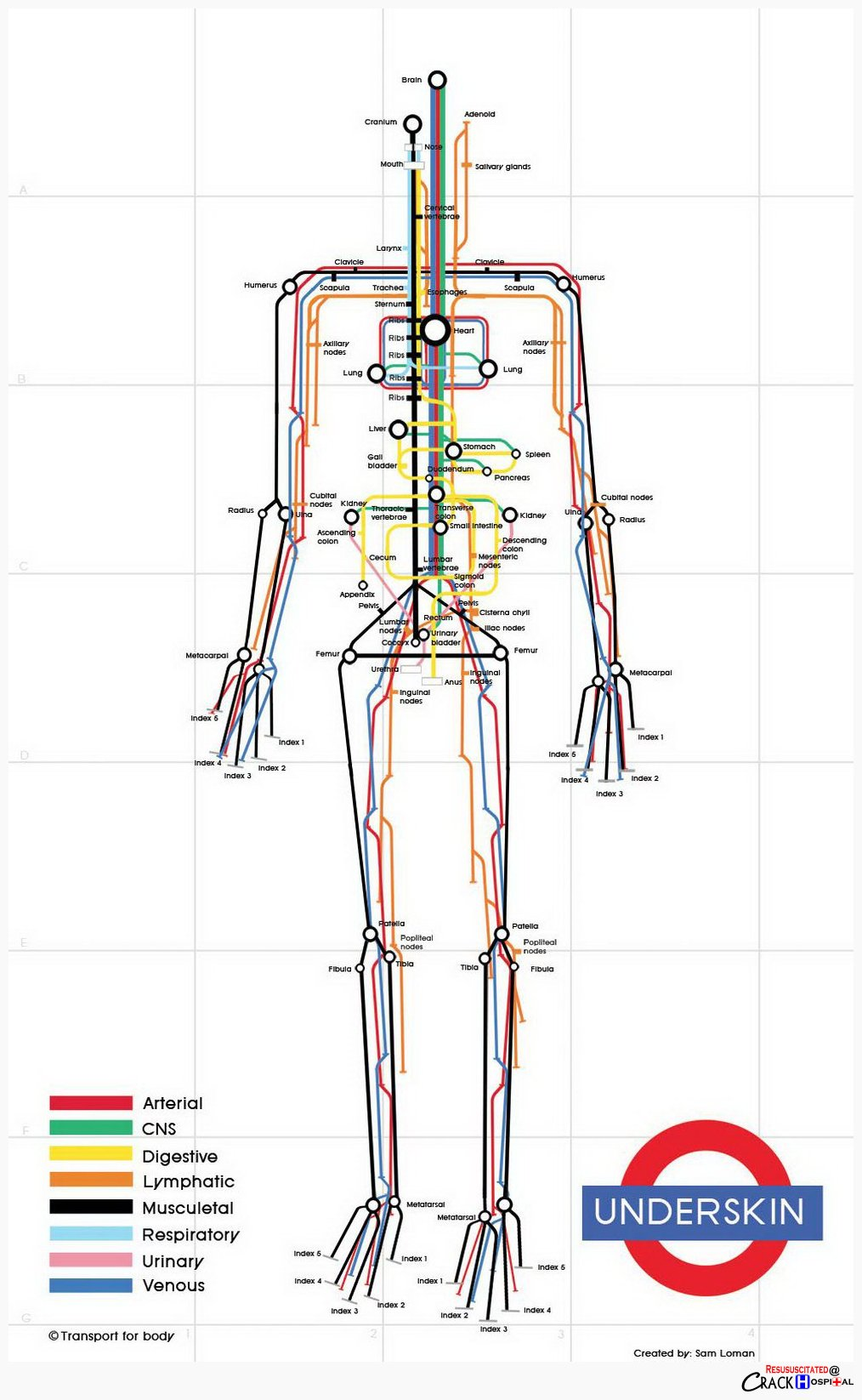 As A Subway Map.Infographic The Human Body As A Subway Map Designtaxi Com