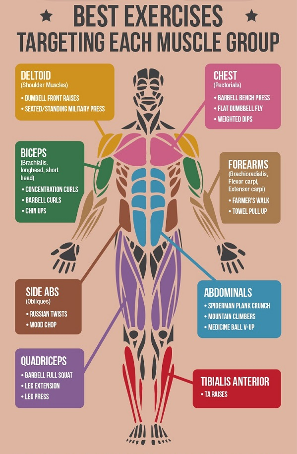 Build Muscle Fast With Exercise Infographic