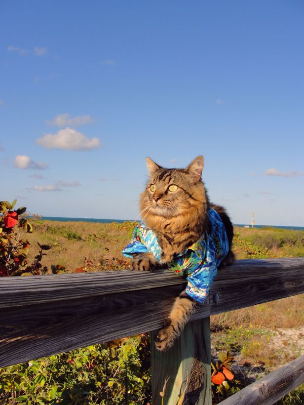 fashionable cat model gets all dressed up poses for