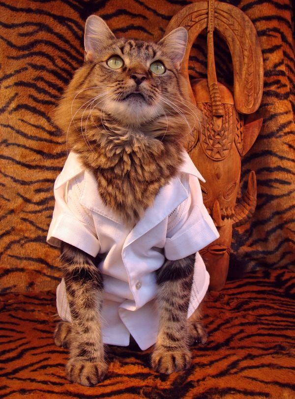 Fashionable Cat Model Gets All Dressed Up, Poses for Photographs